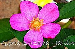 19   - Glória Ishizaka - Rosas do Jardim Botânico Nagai - Osaka