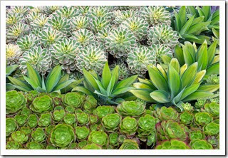 Heads up: Succulent Extravaganza at Succulent Gardens, September 26+27, 2014