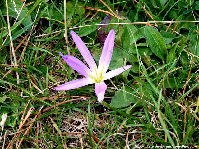 flor-espantaturistas-pirineo.JPG