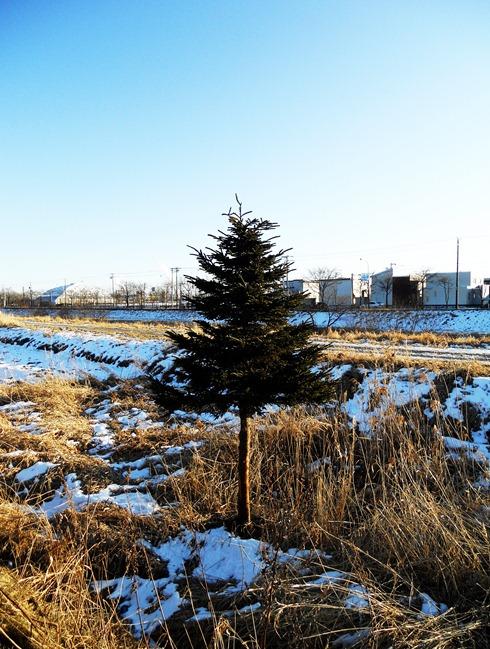2011.12.21-2 冬の散歩道コピー