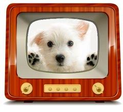 televisor_con_perro