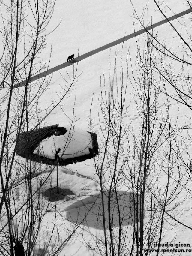 iarna cu umbreluta si pisica_w.jpg