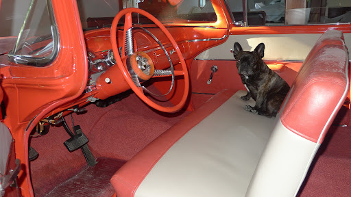 Hello!  I'm sitting in a very special vintage 1958 car in the garage at Skylands.  You may know that Edsel Ford built Skylands, but he also was responsible for a line of Ford cars, called Edsels.