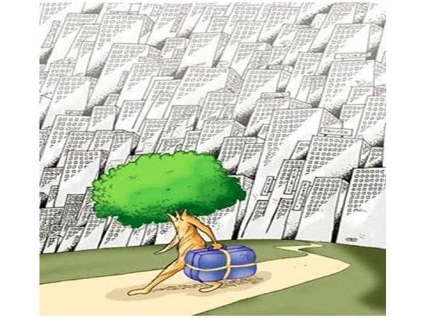 Útima árvore de uma cidade