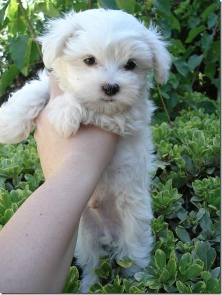fotos de perritos imagenesifotos.blogspot (5)