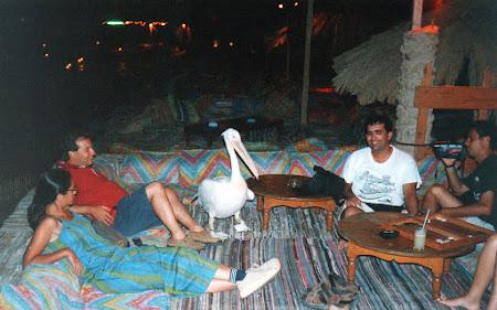 Distractie Egipt: cu Samira, pelicanul din Nuweiba