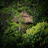 Vanya Tree House Thekkady