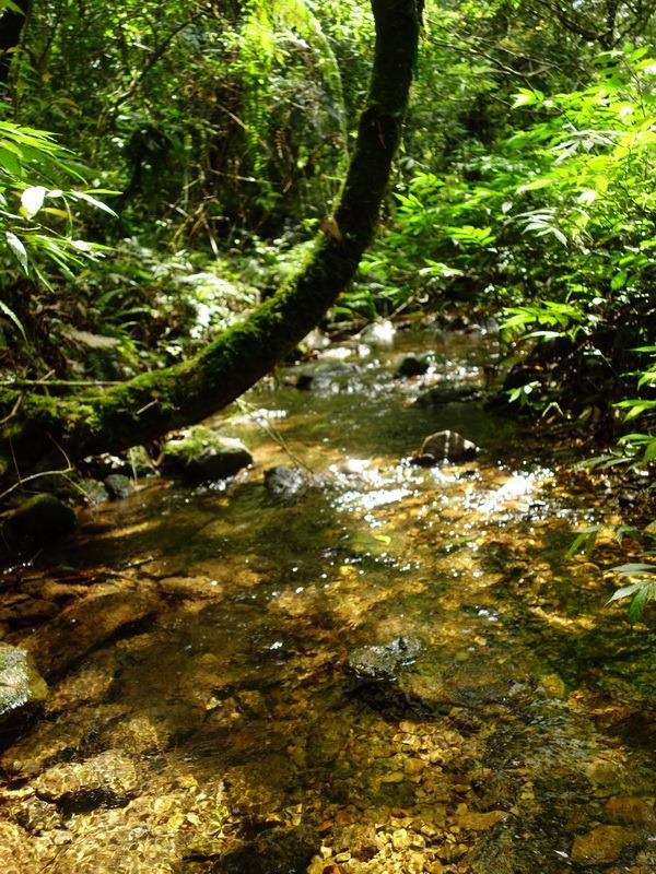 2013_0415-0418 福山植物園-6_009