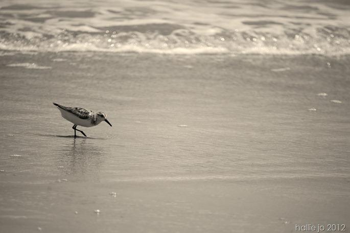 Beach62