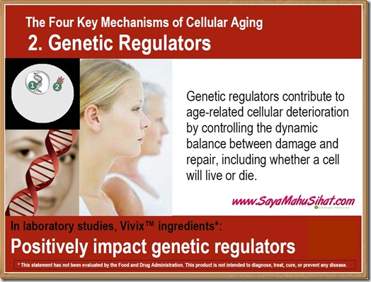 The 4 Mechanisms of Cellular Aging_Genetic Regulator_Vivix