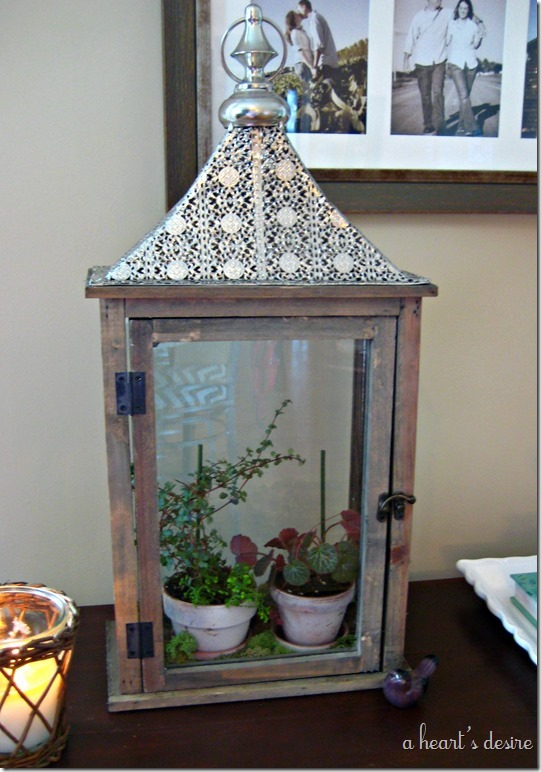 Lantern with plants