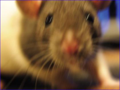 ποντικοσ111