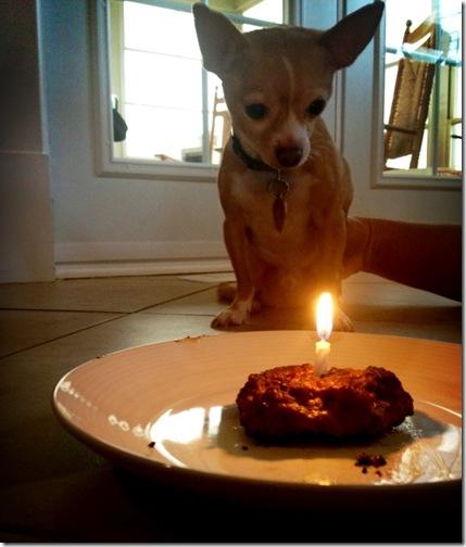 tuckers birthday 6