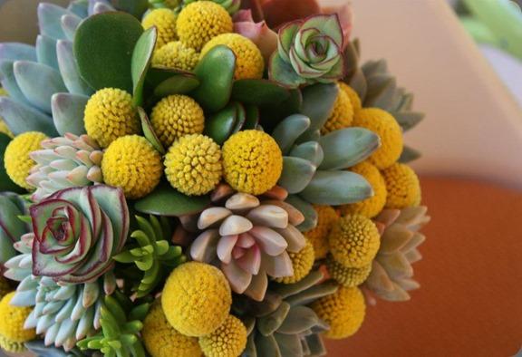 545504_10151233159440152_1002688644_n flora organica designs