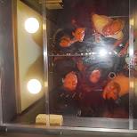 elevator party in Toronto, Ontario, Canada