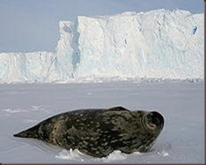 Amazing Pictures of Animals photo Nature exotic funny incredibel Zoo.Antartida (11)