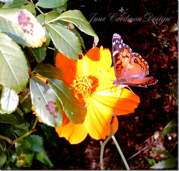 Butterfly_minus43
