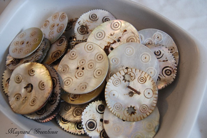 shell buttons