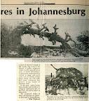 30/10/1981, Star