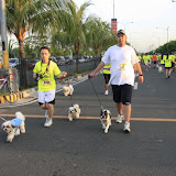 Pet Express Doggie Run 2012 Philippines. Jpg (71).JPG