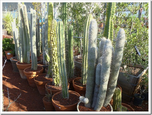 120208_CactusJungle_06