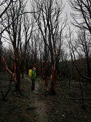 Checking out the burnt forest in Torres del Paine, Chile.