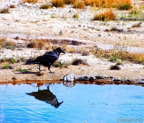 2. Raven-kab