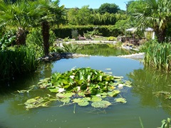 2011.07.01-014 jardin exotique et aquatique