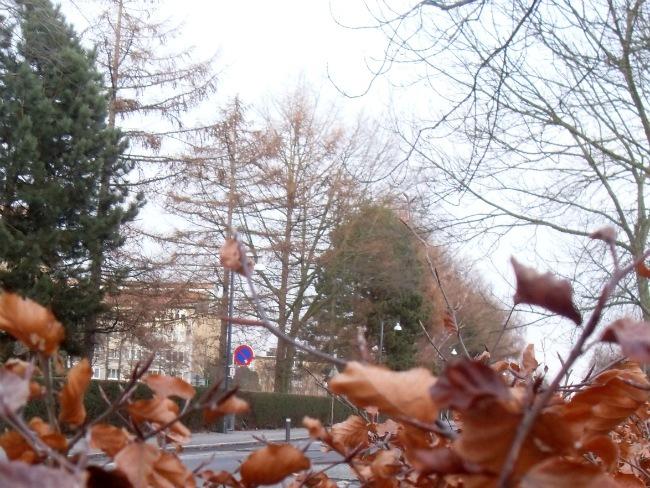 Rødovre, januar 2013