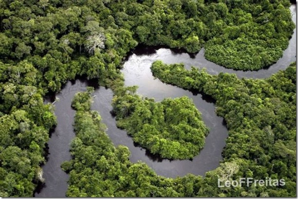 beautiful-amazon-rain-forest-12