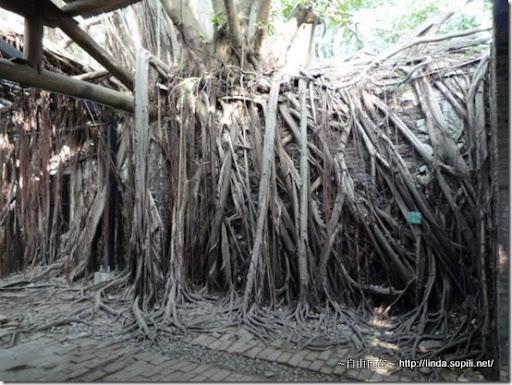 安平樹屋-