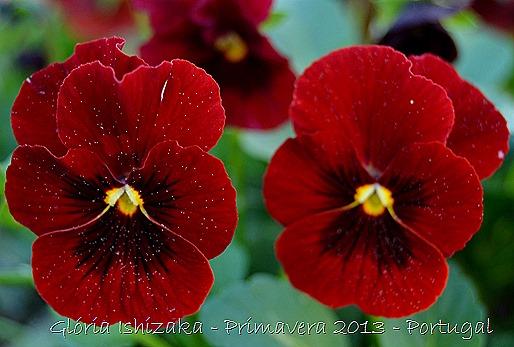 Glória Ishizaka - Primavera 2013 - 32