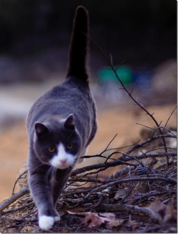 cat12-166