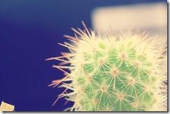 flor-tumblr-facebook-26