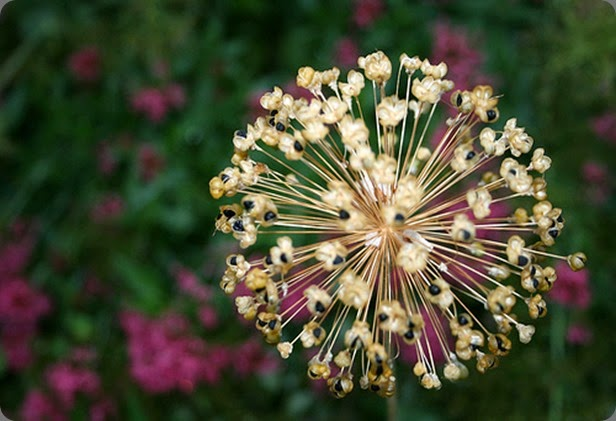 firework_flower_katieelainearmstrong