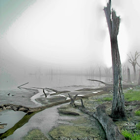 Dry pond in early morning fog in central Florida in summer of 2010. by Raymond Earl Eckert - Landscapes Travel