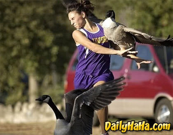 duck attack on a woman