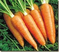 zanahoria-00