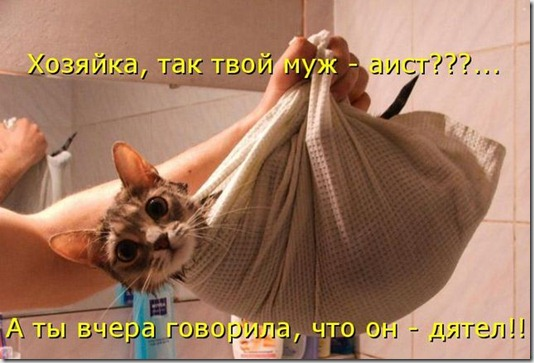 kotomatrix_041