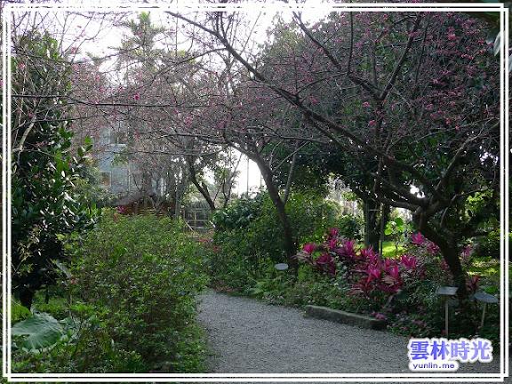 慈園內櫻花