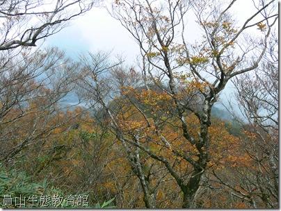 秋天的金黃樹木