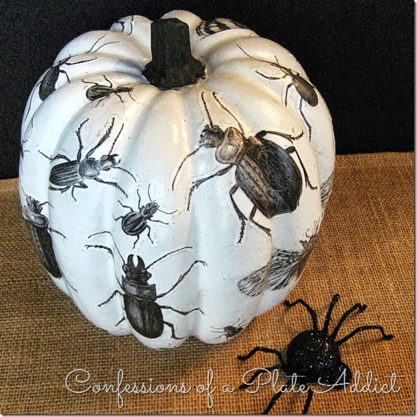 CONFESSIONS OF A PLATE ADDICT Découpage Insect Pumpkin w/Free Insect Graphics