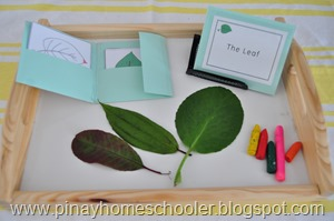 Botany Unit: Trees and Leaves