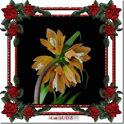 san valentin flores (9)