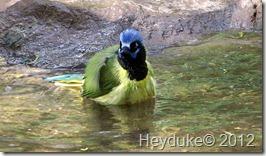 Bentsen Birds 032