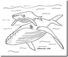 ballena azul chile bogcolorear 2 1