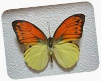 бабочки 124