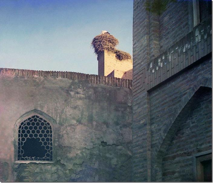 A-Stork-a-scene-in-Bukhara-1911