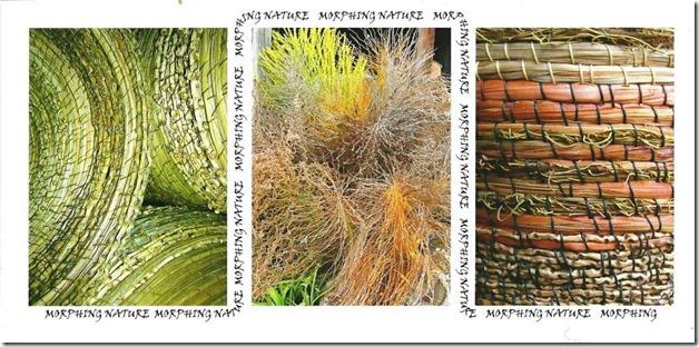 morphing nature 001