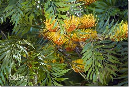 tree-flower-3